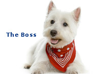 The Boss Pixel web design Kilkenny